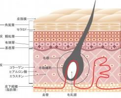 コラーゲンと髪の毛の関係