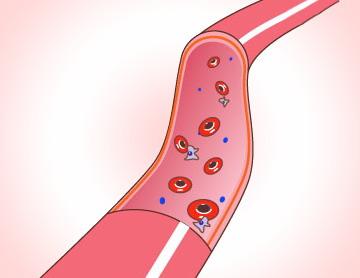 コラーゲンと血管