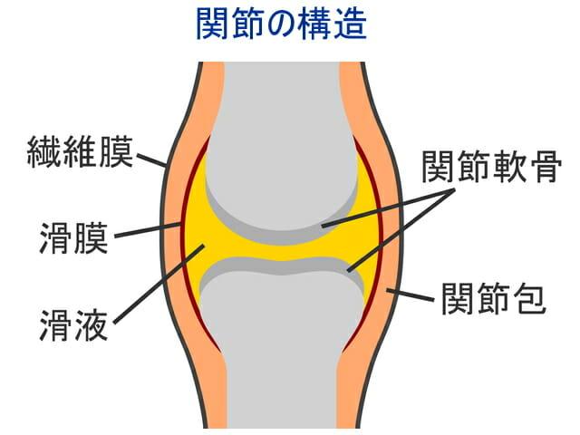 コラーゲンと関節と軟骨