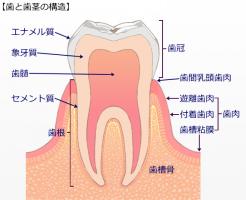 コラーゲンと歯と歯茎(はぐき)の健康