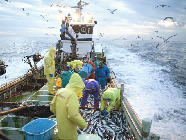 天然 海洋魚 皮 由来 コラーゲン