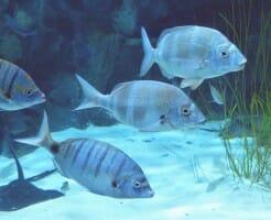 魚由来コラーゲンサプリメント
